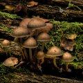 image mushrooms_lr_0024-jpg