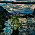 image rivers_lr_0020-jpg
