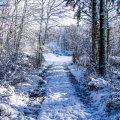 image snow_and_ice_hr_0002-jpg