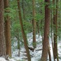 image snow_and_ice_hr_0026-jpg