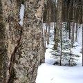 image snow_and_ice_hr_0028-jpg