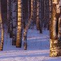 image snow_and_ice_lr_0010-jpg