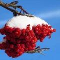 image snow_and_ice_lr_0013-jpg