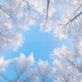 image snow_and_ice_lr_0022-jpg